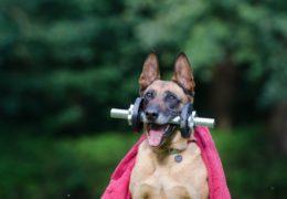 Guma – bardzo uniwersalne urządzenie do ćwiczeń